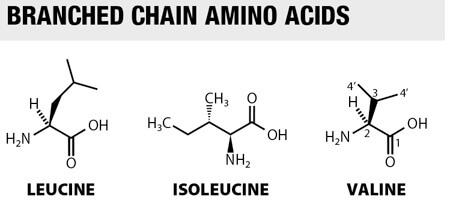 aminozuren keten plaatje