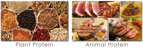 plant versus dierlijke eiwitten