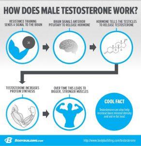 testosteron1