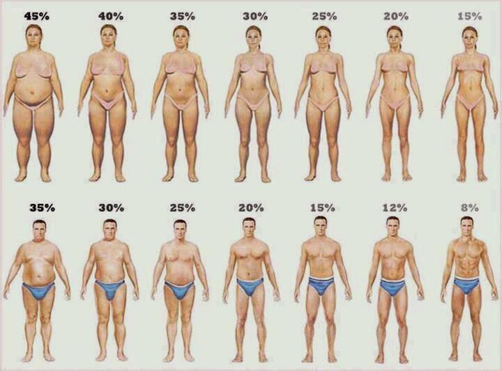 verlagen vetpercentage